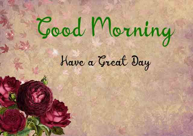 latest rose Good Morning pics hd free download