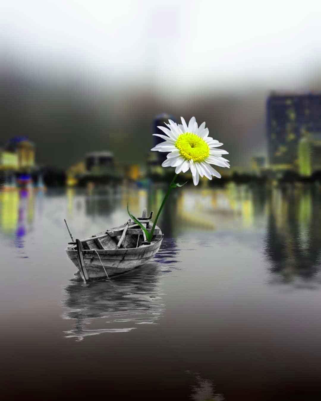 latest sad flower k Whatsapp Profile pics hd