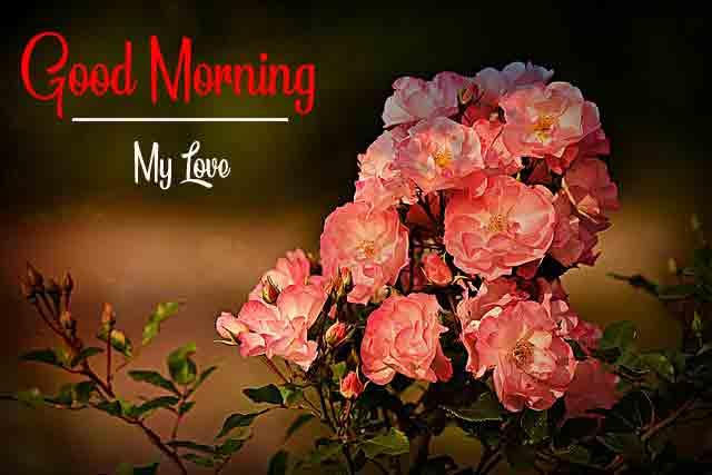 latest sad rose Good Morning pics hd