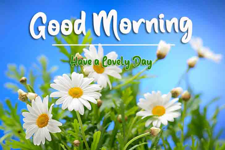 latest sunflower Good Morning pics hd free download