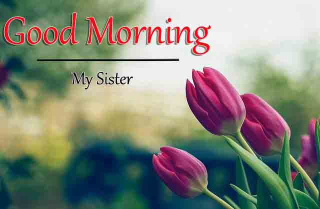 latest tulips flower Good Morning picture hd download
