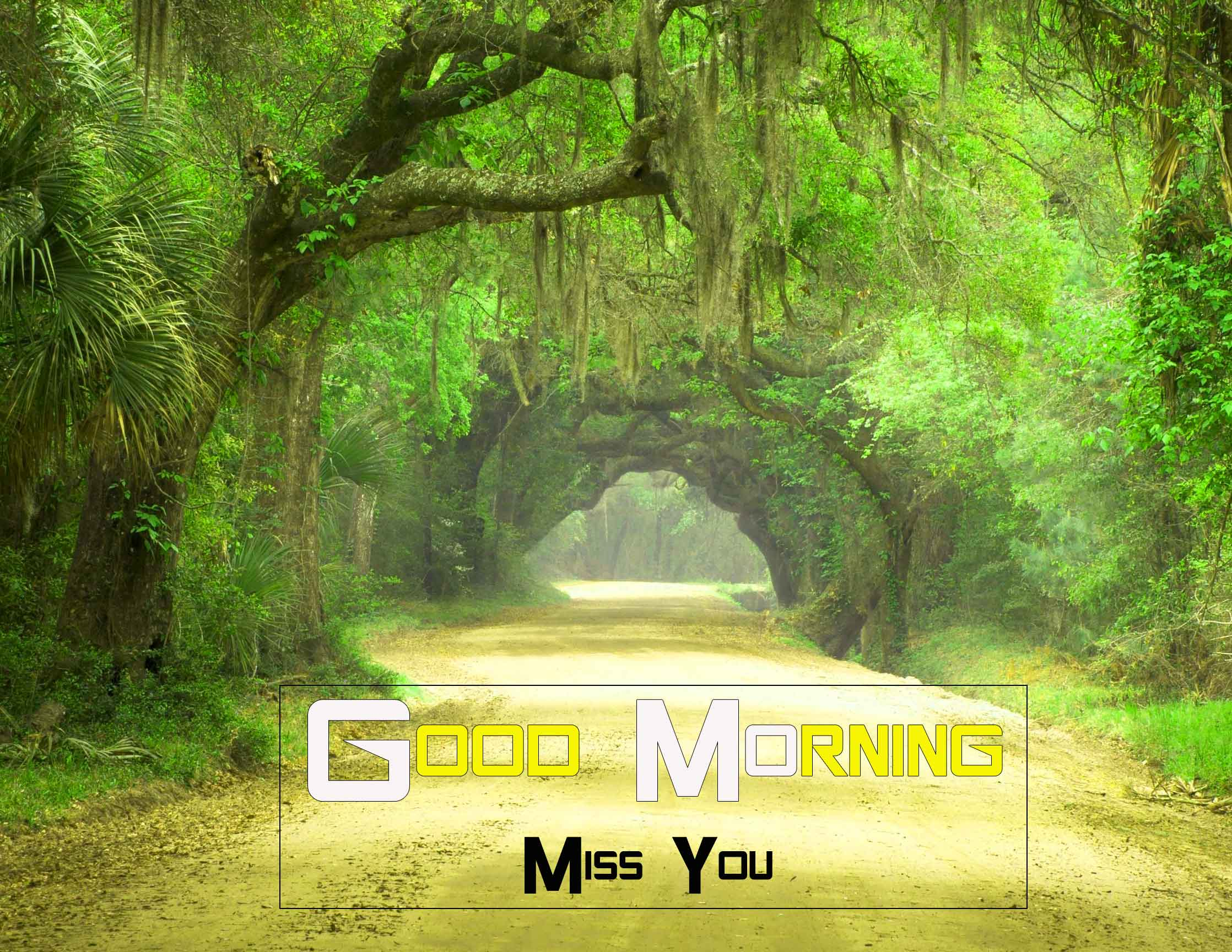 nature Good Morning hd download