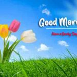 Good Morning All Images [1898+ Download ] Wallpaper HD