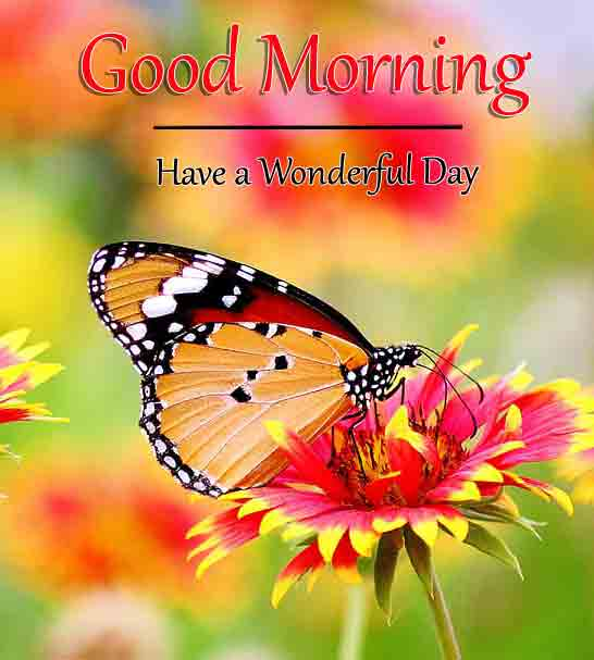 new butterfly k Good Morning images hd