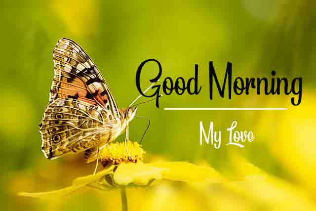 new butterfly and flower for k Good Morning pics hd