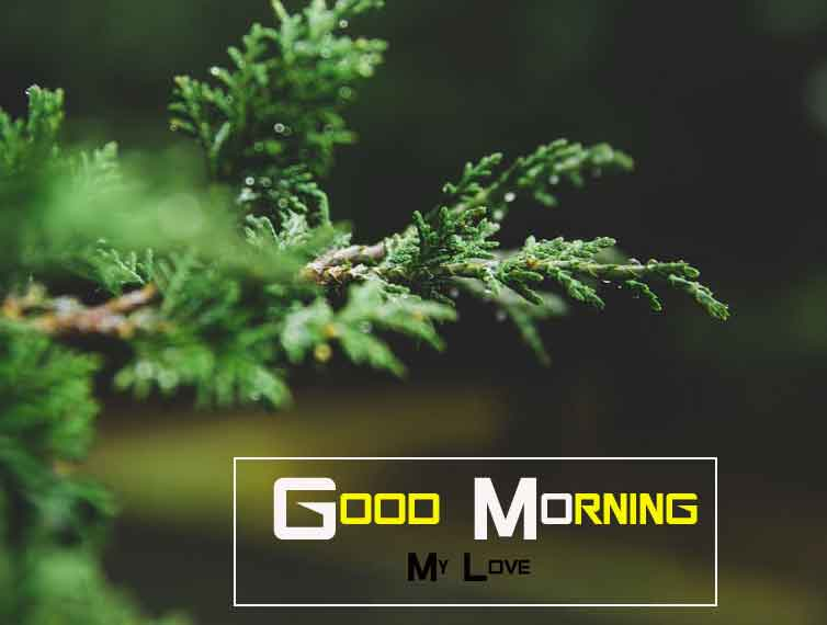 nice Good Morning Nature images for whatsapp hd