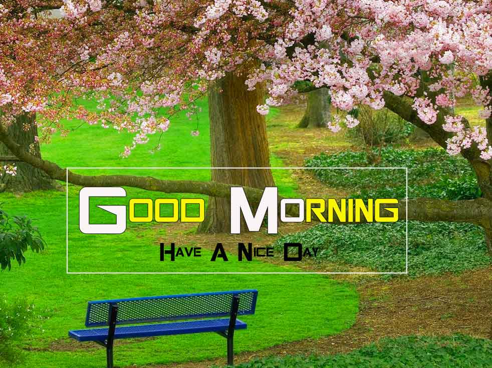 nice Good Morning Nature profile images hd