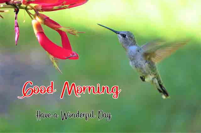 nice bird and flower for k Good Morning images hd