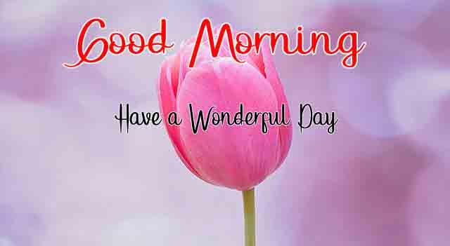 nice dark pink flower p Good Morning pics hd