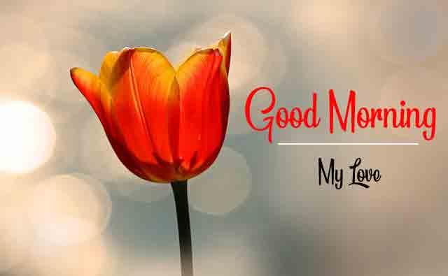 nice single red flower Good Morning pics hd q