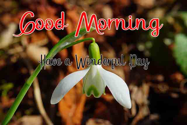 nice white flower Good Morning picture hd