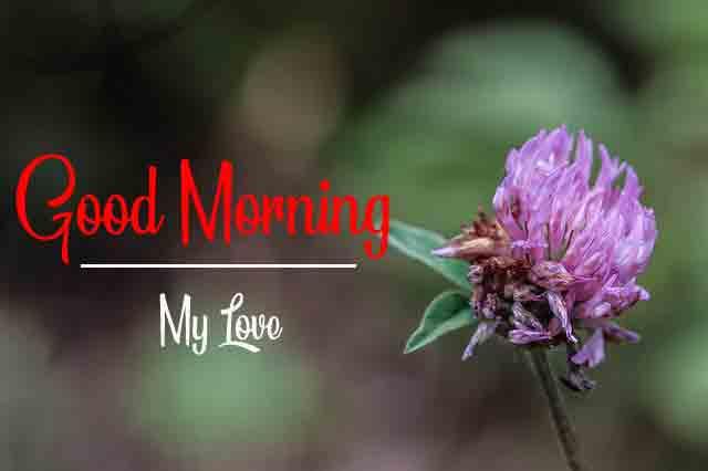 pink flowe Good Morning hd free download