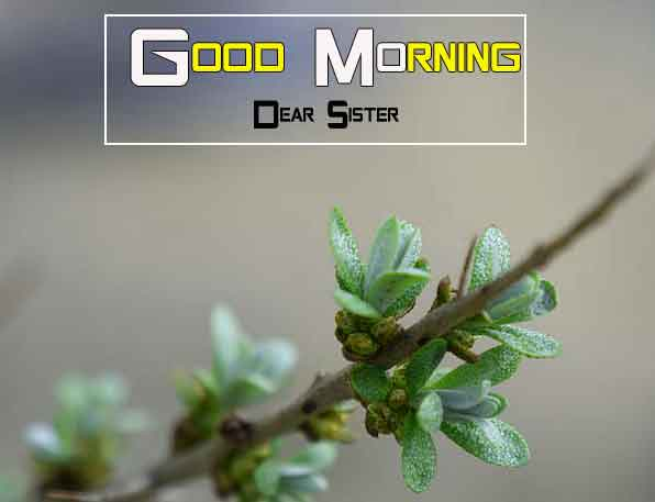 plant Good Morning Nature images hd