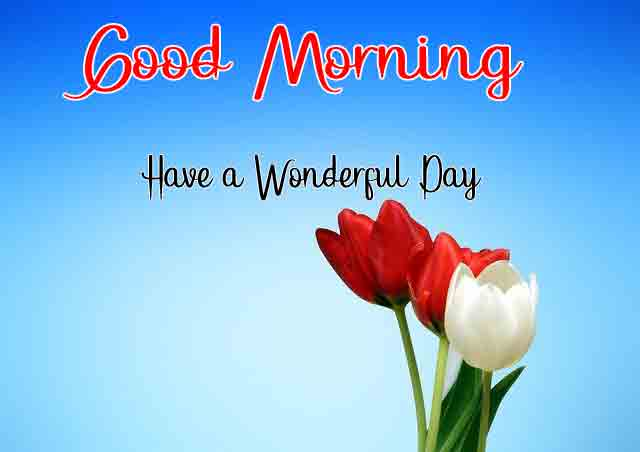 red and white p Good Morning pics
