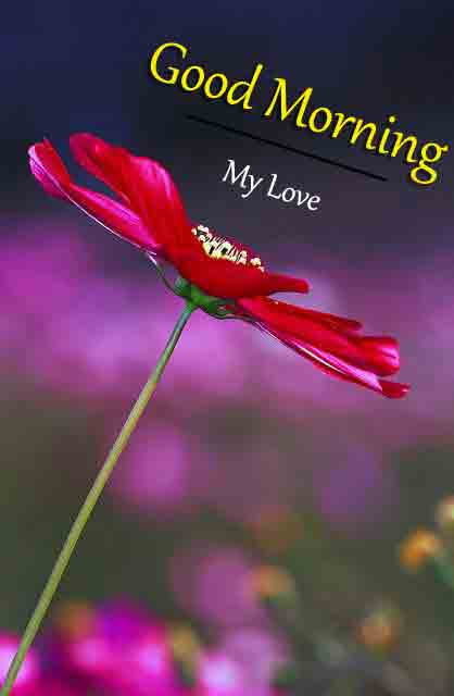 red flower p Good Morning pics hd