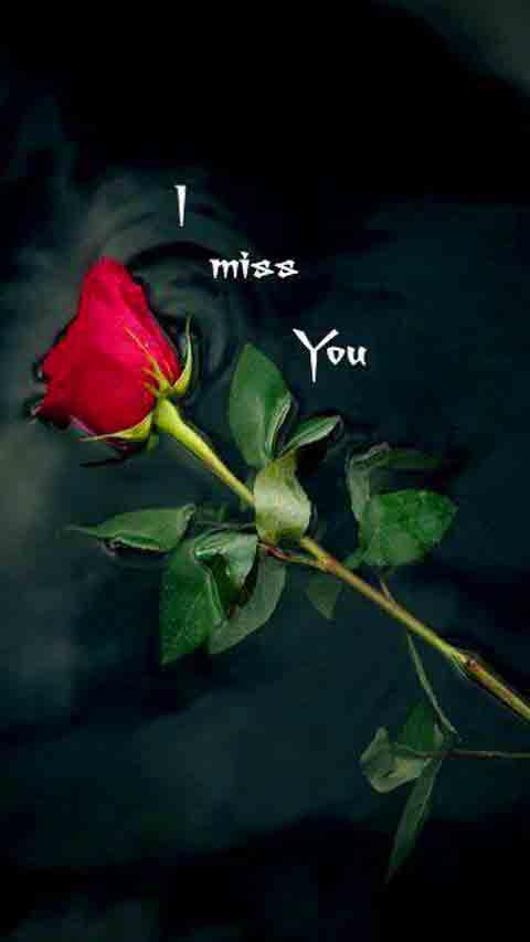 rose I Miss You Images