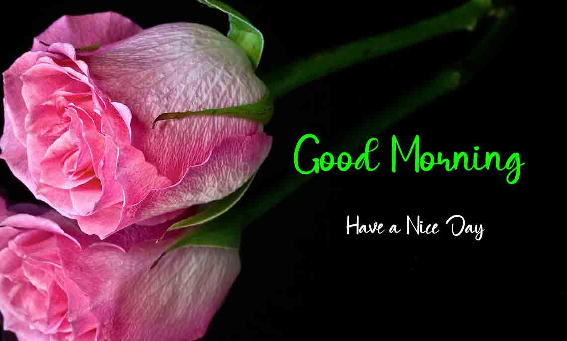 sad rose p Good Morning pics hd