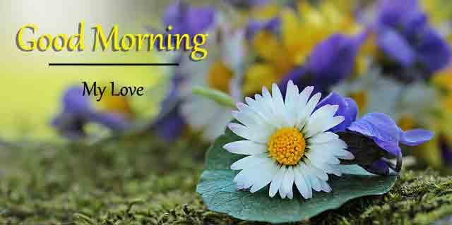 sad white flower Good Morning hd