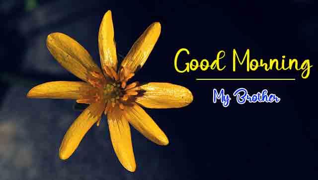 sad yellow flower k Good Morning images hd