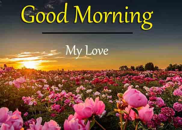 sunset rose flower Good Morning pics