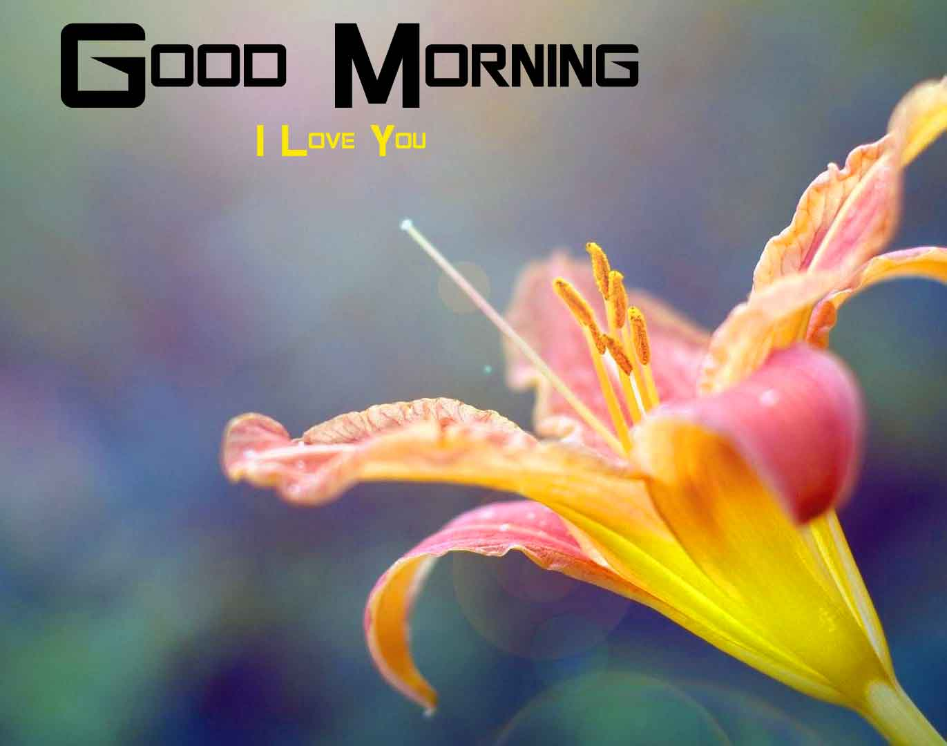 tulips Flower good morning hd download