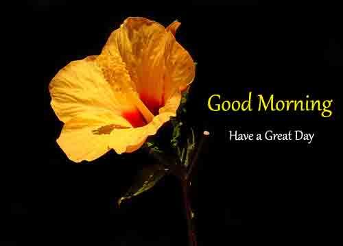 yellow k Good Morning pics hd