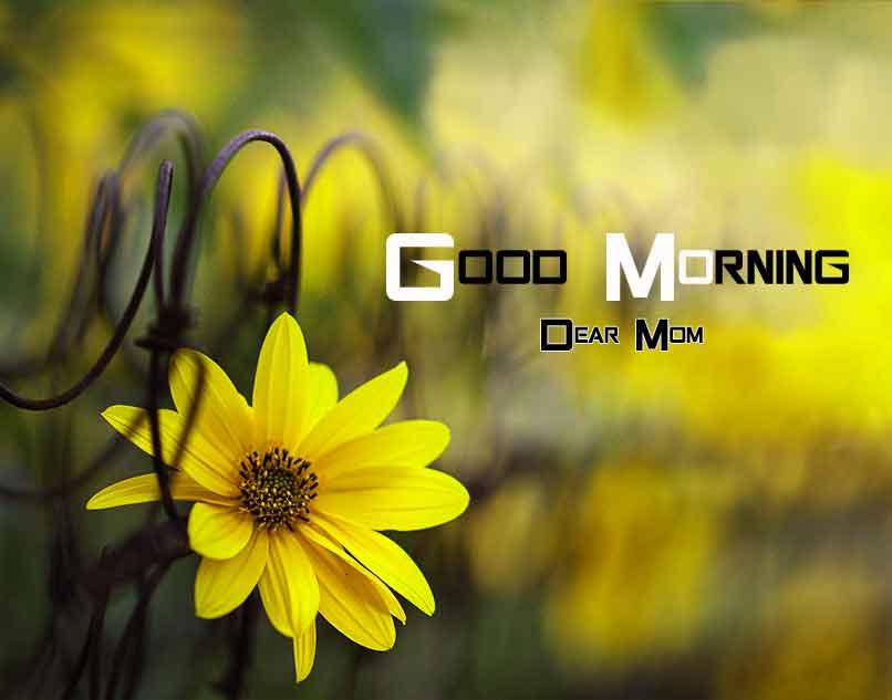 yellow Flower good morning hd free