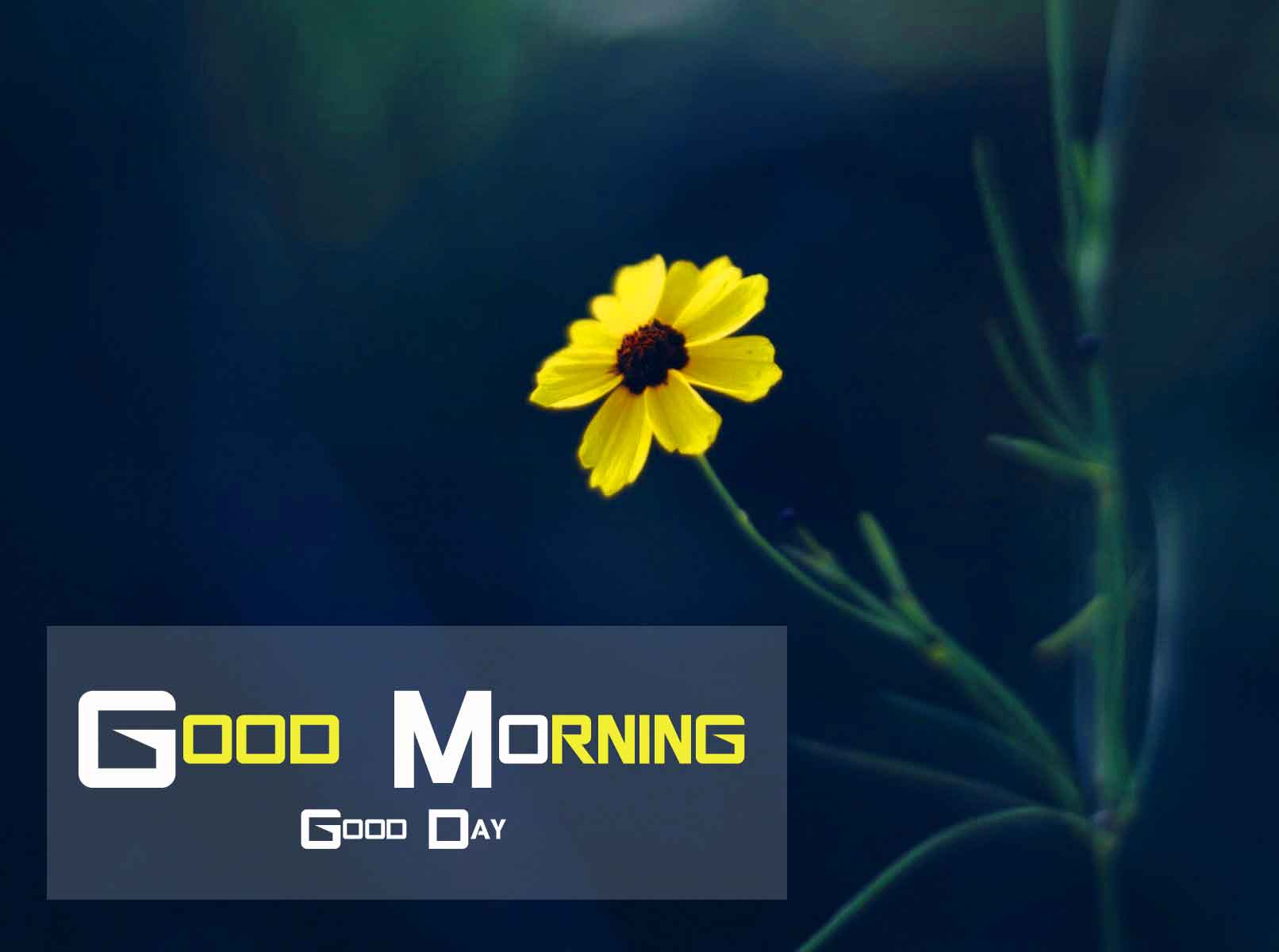 [ 1317+ Download ] Good Morning Flowers Pictures for Whatsapp