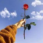 Latest Nice Whatsapp DP Images pictures for flower