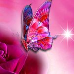 free butterfly New Nice Whatsapp DP Images