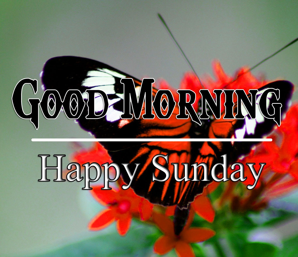 Butterfly sunday good morning Images