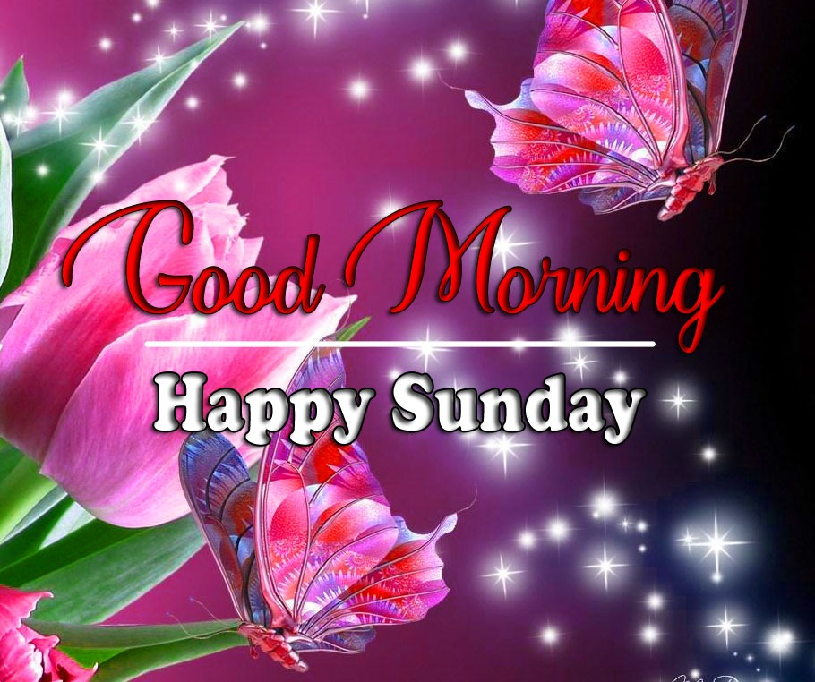 sunday good morning Pics With Rose